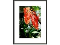 "Framed Print 8x12 ""Tropical Flower"""