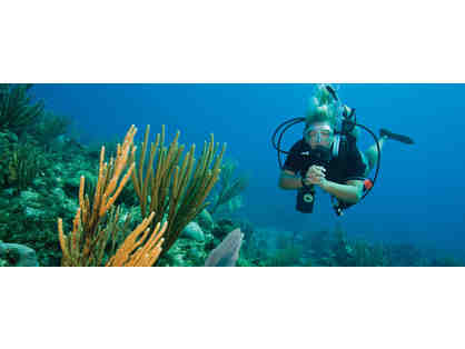 Discover Scuba Dive with Dive Centre Manly