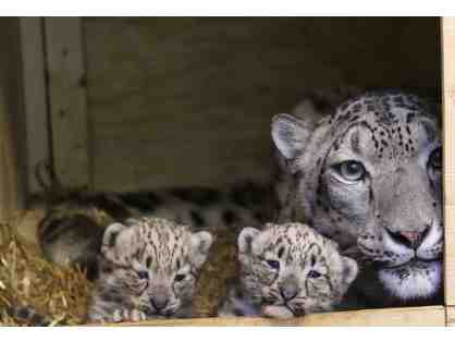 Snow Leopard Naming