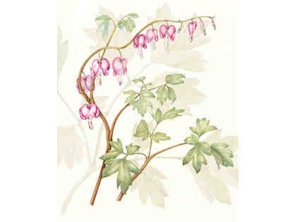 "Dicentra spectabilis ""Bleeding Heart"" by Bonnie S. Driggers"
