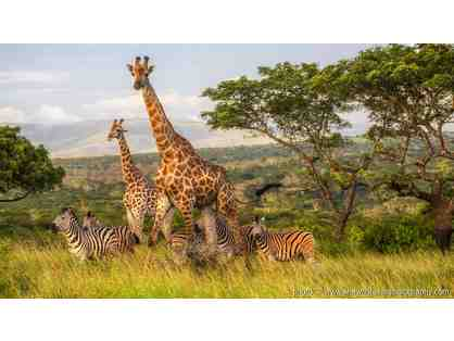 South African Photo Safari Auction Package for Two at Zulu Nyala