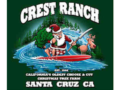 6 foot Christmas Tree from Crest Ranch Choose & Cut Tree Farm