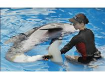 Trainer for a Day! Train with Winter the Dolphin's Trainer!