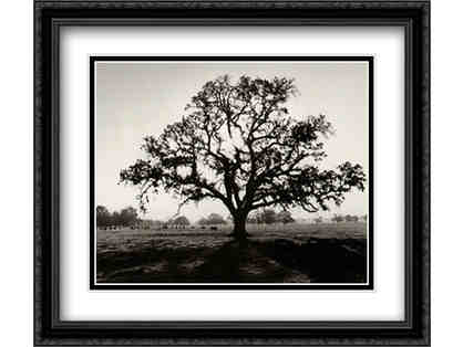 "Stunning print ""Oak Tree, Sunrise"" by renowned photographer Ansel Adams"