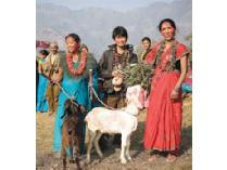 "Buy a Goat for Nepal - ""Buy it Now"" Item"