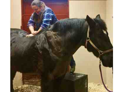 Equine Chiropractic Adjustment by Dr. Andrea Sotela